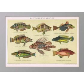 Старинная литография Рыбы с цветным окрасом