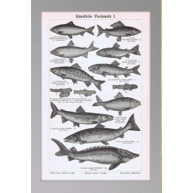 Антикварная гравюра Искусственное рыбоводство, коллекция немецких гравюр