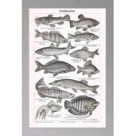 Антикварная гравюра Прудовое рыбоводство, карты и гравюры в интерьере