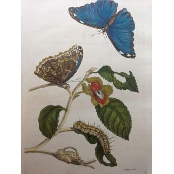 Старинная антикварная гравюра 16 века Бабочки