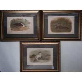 041 Купить набор гравюр птицы России, виды фауны, тов-во И. Н. Кушнерев и Ко