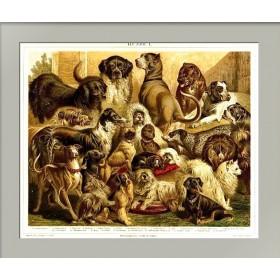 1887 Породы служебных и декоративных собак