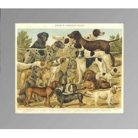1897 Собаки охотничьи Prosv