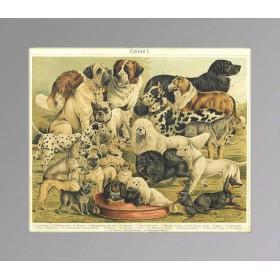1897 Собаки Породы Просв