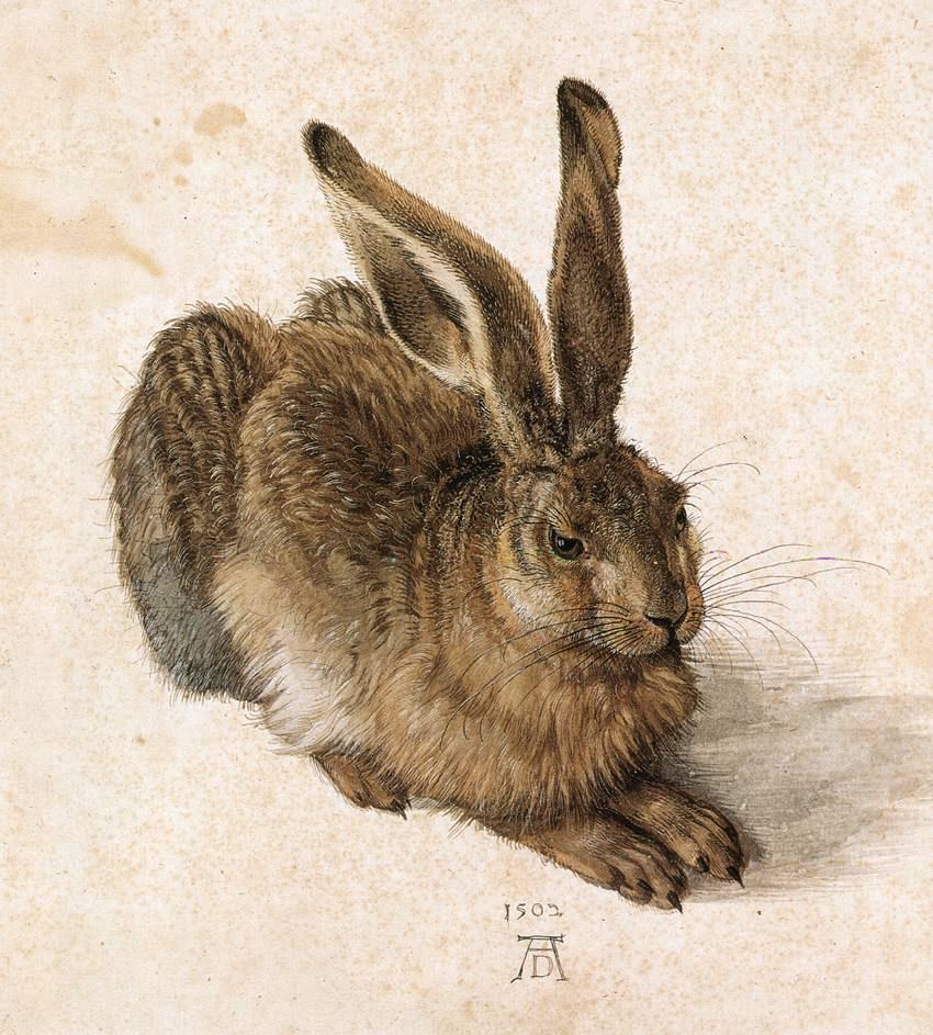 А. Дюрер. Заяц. 1502
