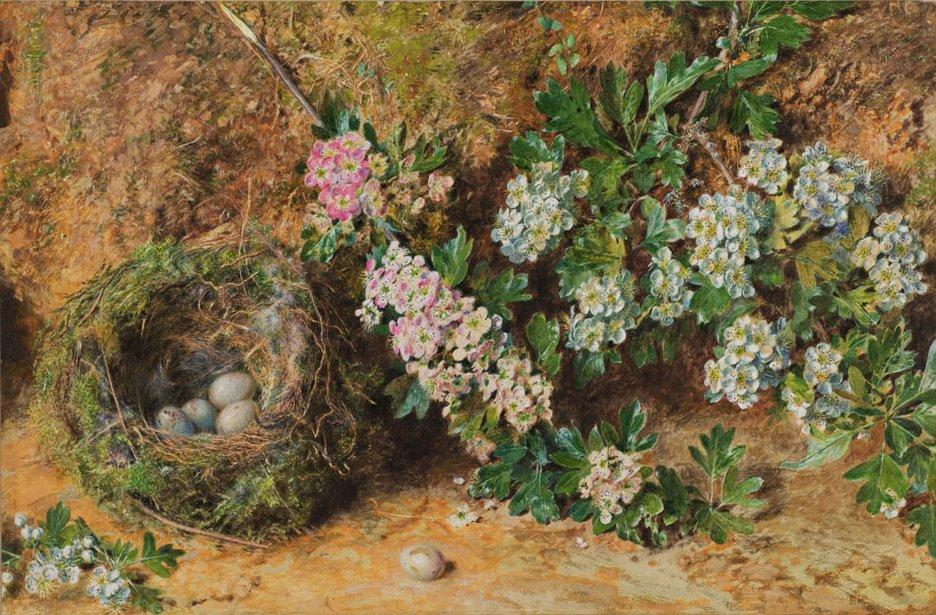 Английская живопись, Художник У.Г.Хант. Гнездо зяблика и майский букет.1845